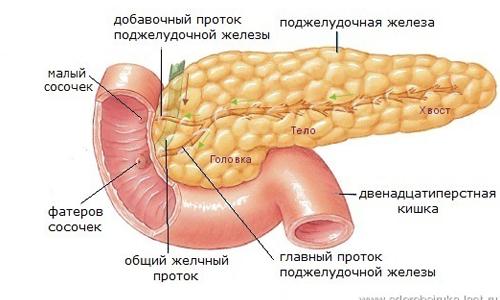 Вши и гепатит с отзывы