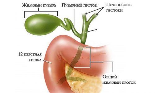 Присутствие в поджелудочной железе желчи связано со сбоями в функционировании желчного пузыря