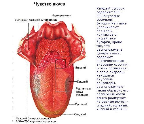 паразиты вызывающие запах изо рта