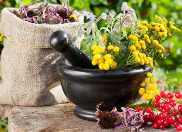 Какие травы использовать при холецистите и панкреатите?