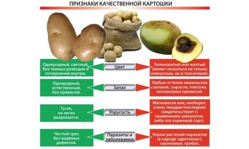 Выбор качественного картофеля для приготовления сока