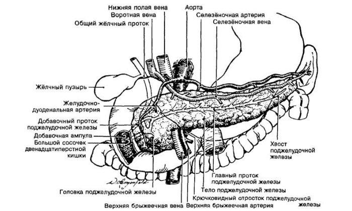 Болит левое плечо причина лечение