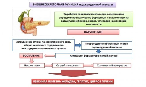 Внешнесекреторная функция поджелудочной железы