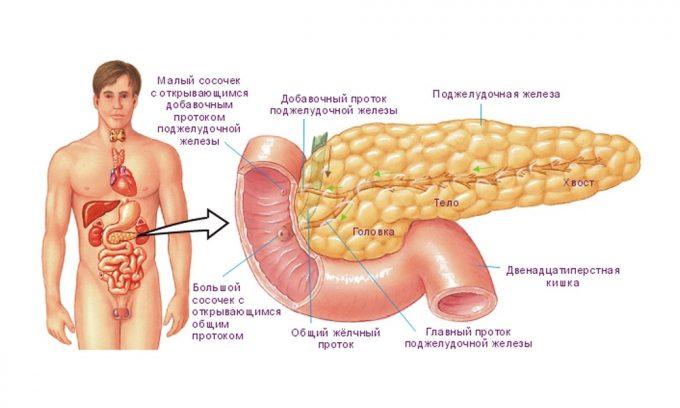 Головка поджелудочной железы располагается в области проекции дуги двенадцатиперстной кишки. Повреждение этой части органа проявляется острой или ноющей болью в эпигастрии и правом подреберье