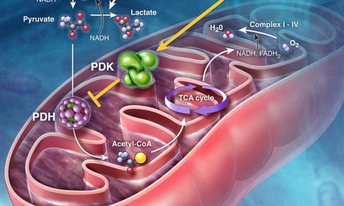 Нарушение обменных процессов ведет к воспалению поджелудочной железы